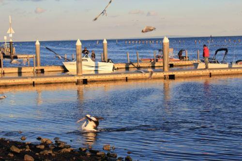 Pier & Boat Ramp Access